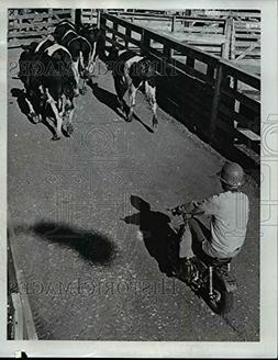 1973 Press Photo ortland Livestock Market where cowboy on mi