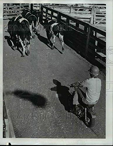 1973 press ortland livestock market